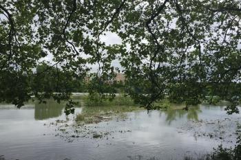 Rhein-Hochwasser während des Filmfestivals im Juni 2016